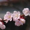 急性の花粉症に有効な4種の漢方薬 小青龍湯・麻杏甘石湯