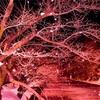 【珍道中】冬に桜!?弘前の旅〜いざ!花見!編