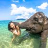 毎日が象さんと一緒