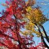 高尾山に紅葉を観に行く。天気も良くとても綺麗な紅葉でした^^