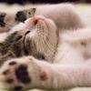 夜眠れないときにおすすめ!個人的に効果があった熟睡法3つ