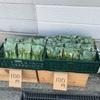 初めて野菜を販売してみたら完売しました
