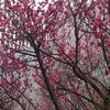 【山口・岩国】『獺祭』の旭酒造主催、「東京獺祭の会」参加♪