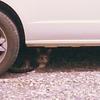ドーナッツドーナツドーハ海峡の猫