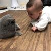 【最近のネコと我が子〜膝枕してもらう仲〜】ダイエット125日目(10月31日)