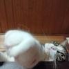 猫パンチ!&小説更新♪