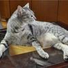 ペット栄養管理士の試験!