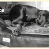 My dog bed - 僕のドッグベッド