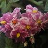 5月17日誕生日の花と花言葉歌句