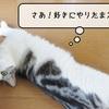 猫雑記 ~冬毛の準備~
