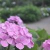 花びら集めて