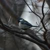 早朝探鳥・井の頭公園の野鳥/2019-2-1