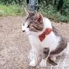 猫の町「尾道」に行ってきた