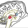 パチンコ店に人が押し寄せる理由とは?依存症のメカニズムと脳の変化