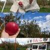 群馬県沼田市でりんご狩り♪オススメの吉野りんご園