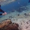 沖縄シュノーケリングで大変なことになった初体験レビュー。
