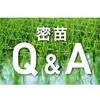 【まとめ】密苗(密播)栽培の手順とイチオシ農機具