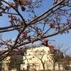 スペースワールド行くぜや / 桜もぼちぼち / チナミ、10歳の誕生日(^◇^)