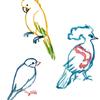 水彩イラスト_鳥のスケッチ,文鳥 オウム,カンムリバト