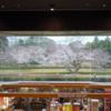 佐倉の桜・2019年