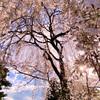 ゆるキャンの舞台になった身延町(山梨県)をぶらり散歩〜満開のしだれ桜と身延山からの絶景と美味しいものと。