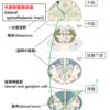臨床実習攻略!! 感覚障害のレポートの書き方(๑╹ω╹๑ )