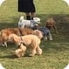 新横浜公園ドックランと犬も入れるレストラン