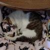 年中眠ってる猫 刃が切れない原因