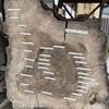 天の岩戸(あまのいわと)の伝説で知られる「茅部神社」の樹齢270年の御神木!