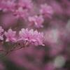 毎年花を咲かせるって羨ましい
