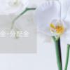 【2021年5月】配当金・分配金まとめ
