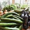 【家庭菜園】夏野菜6種類を収穫しました!