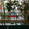 2008年朱鷺草咲きました。