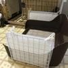 愛犬デカチワワのマロンのトイレを強化しました!