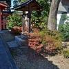 田中神社の紅葉2019、山茶花も観賞。