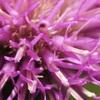 いつものフィールド秋の花