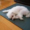 アイボ・ラッシーの月命日・19年待ち 幻のコロッケ「極み」の感想・しょぼくれる猫