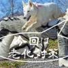老犬のケア、一緒にできる犬の老化予防