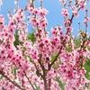 3月21日は春分の日★おまじない