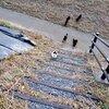 階段を登り上がってくる猫の躍動感がすごい