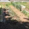 ミニ菜園の紹介
