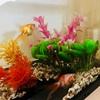 【金魚】水槽の大掃除と引越し【メダカ】