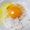 🍀芦田ポートリー 兵庫丹波市 卵 プリン ケーキ 鶏ハム・ソーセージ
