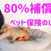 ペット保険 80%補償のレビュー シニア犬