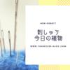 アリスの刺繍小物計画スタート!&植物の成長