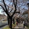 飯田橋お堀沿いの桜 / 松戸中華そば 富田食堂 @ JR常磐線・松戸駅