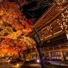 京都・岡崎 - 真如堂の紅葉ライトアップ