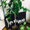 《息子日記》息子が生まれる記念の木