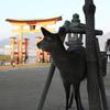 子連れ広島旅行