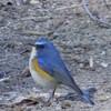 多摩動物公園の野鳥たち